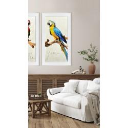 Obraz kolorowa papuga II