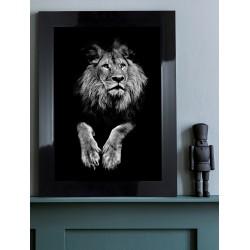 Obraz czarno-biały lew
