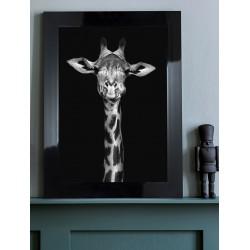 Obraz czarno-biała żyrafa