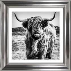 Obraz krowa szkocka I
