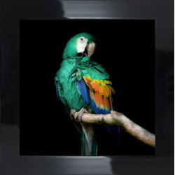 Obraz turkusowa papuga