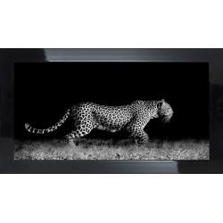 Obraz czarno-biały lampart