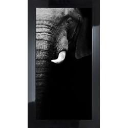 Obraz czarno-biały słoń