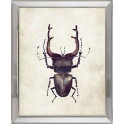 Obraz brązowy owad