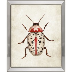 Obraz czerwony owad