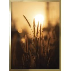 Obraz trawy w słońcu II