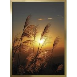 Obraz trawy w słońcu I
