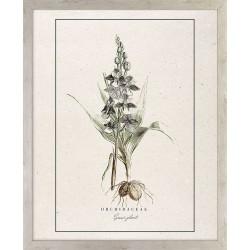 Obraz roślina ORCHIDEA