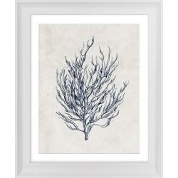 Obraz roślina morska I