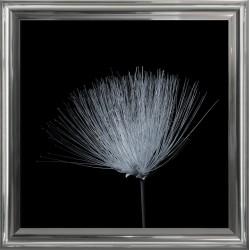 Obraz delikatny kwiat II