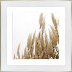 Obraz trawy w sepii
