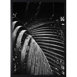 Obraz black palm II