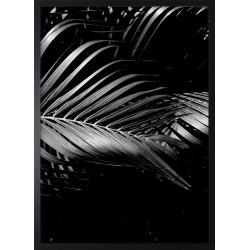 Obraz black palm I