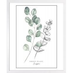 Obraz green plant