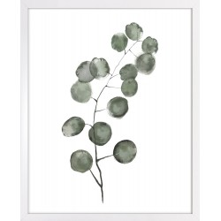 Obraz gałązka eukaliptusa
