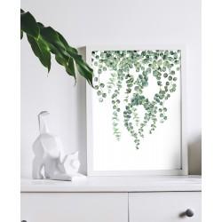 Obraz pędy eukaliptusa