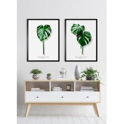 Obraz dwa zielone liście monstery