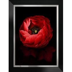 Obraz czerwony kwiat