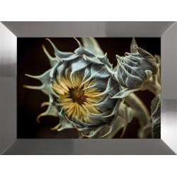 Obraz słoneczniki I