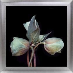Obraz artystyczne tulipany II