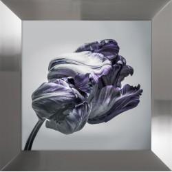 Obraz fioletowy tulipan II