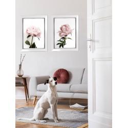 Obraz fotografia różowej piwonii II