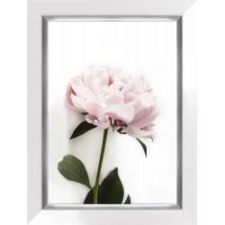 Obraz fotografia różowej...