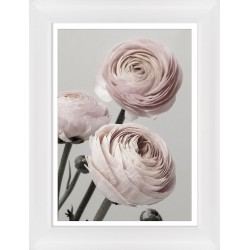 Obraz bukiet różowych pełników