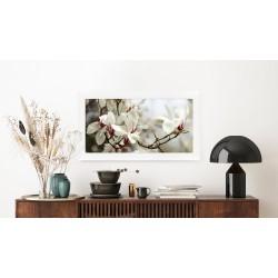 Obraz drzewo magnolii