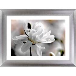 białe płatki magnolii