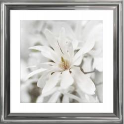 zdjęcie białych kwiatów magnolii