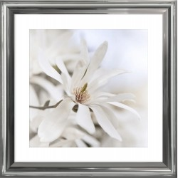 biały kwiat magnolii