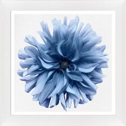 Obraz niebieski kwiat dalii II