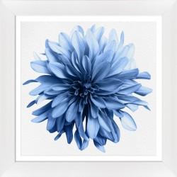 Obraz niebieski kwiat dalii I
